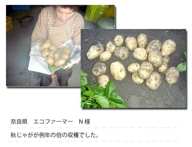 奈良県 エコファーマー N様秋じゃがが例年の倍の収穫でした。